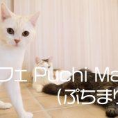猫カフェ Puchi Marry(ぷちまりー)沖縄北谷店